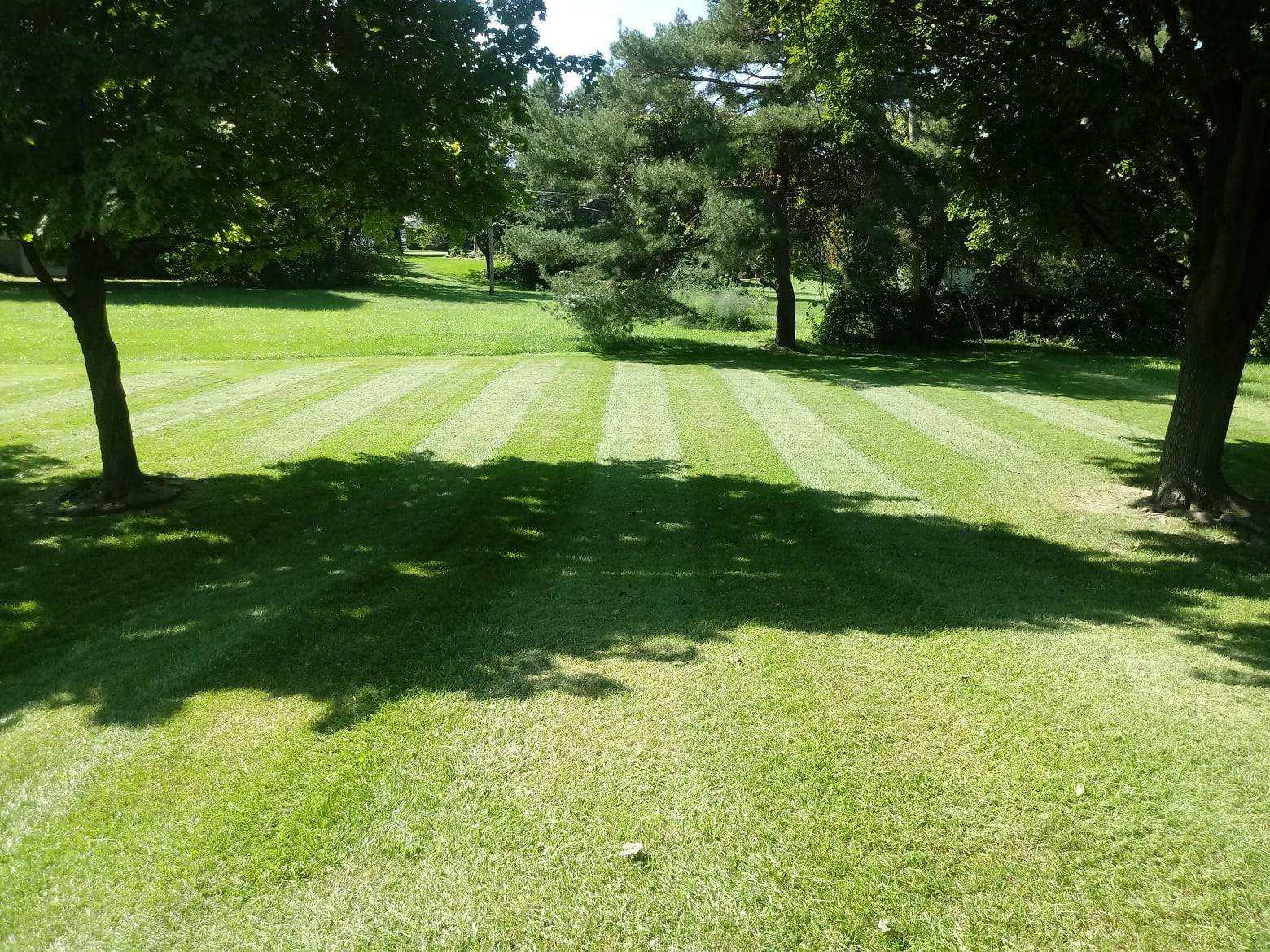 Enhance Your Lawn's Appearance